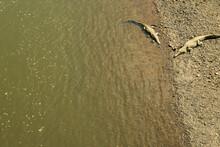 Two Crocodiles As Seen From The Bridge