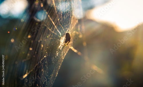 Fotografie, Obraz a spider in a web in the forest