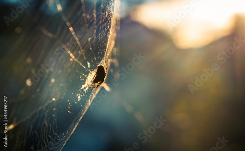 Canvas Print a spider in a web in the forest