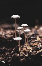 Magic Mushrooms Growing In A Natural Environment