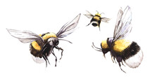 Hand Drawn Watercolor Illustration. Three Black And Yellow Bees Are Circling With Their Wings Spread. Set Of Decorative Element Isolated On White Background