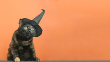 Funny Black Multi-colored Cat In A Black Hat On The Theme Of A Witch For Halloween On An Orange Background With A Place For The Text.
