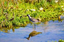 Bird Wading In Water Near Lush Foliage Along Shoreline