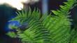 Liść paproci oświetlony słońcem. A fern leaf lit by the sun.