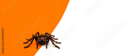 Photo Black Halloween spider on orange and white background with blank space for text