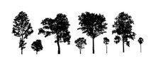 Set Of Trees Silhouette For Brush On White Background