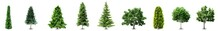 Collection Realistic Trees Isolated On White Background. Trees Isolated On White Background. Trees Icons Set.