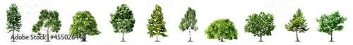 Fotografie, Obraz Set of trees isolated on white background