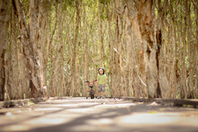 Boy Riding Bike Along Walkway Surrounded By Tall Paperbark Trees