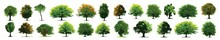 Set Of Grass. Trees Icons Set