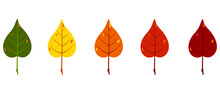 Five Autumn Leaves Of Green, Yellow, Orange And Red Colors