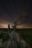 Fototapeta Na sufit - Drzewo w Sułoszowej