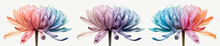 Banner Of Three Colored Chrysanthemums On A Light Background, Front View, Pastel Shades