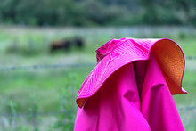 Toros De Lidia En El Campo Y A La Distancia Un Percal Acicalado