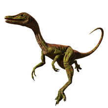 Compsognathus Longipes, Small Dinosaur From The Late Jurassic Period, Isolated On White Background