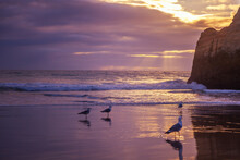 Sunset On The Atlantic Ocean In Portugal With Seagulls