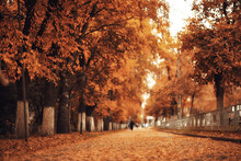 Alley In Autumn Park Landscape, Fall Yellow Road Seasonal Landscape In October In The City