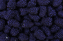 Many Berries Of Juicy Bright Tasty Purple Blue Blackberries, Top View. Berry Texture. Close-up, Background Image Of Food On A Flat Surface. Vegetarian Healthy Food, Dessert, Healthy Delicacy