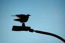 Low Angle View Of Silhouette Bird Perched On Lamp Post At Sunrise