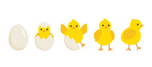 Cute Baby Chick Born From An Egg. Chicken Hatching Stages. Newborn Little Yellow Cartoon Chicks For Easter Design. Cracked Shell And Bird Hens Emergence From Egg. Vector Illustration