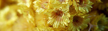 Close-up Of A Yellow Flowers