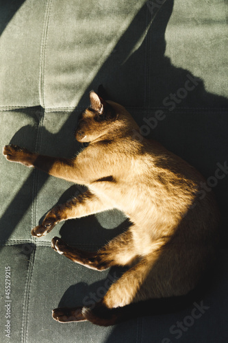 Close up of pet cat in bedroom, lying on bed
