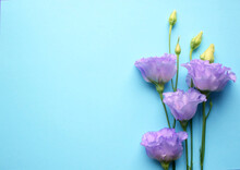 Beautiful Violet Eustoma Flowers (lisianthus) In Full Bloom With Buds Leaves. Bouquet Of Flowers On Blue Background. Copy Space