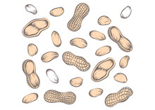 Seamless Pattern Peanuts Drawn By Hand. Vector Illustration Of Peanut In Nutshell And Without It. Peanut, Groundnut On A White Background.