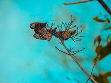 Shallow Focus Of Brown Butterflies On A Bench Of The Tree On A Blue Blurry Background