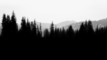Silhouette Of A Pine Tree Forest And Mountain Landscape, USA