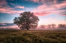 Sunset Over The Field Tree Natonal