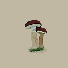 Two Mushrooms In The Grass