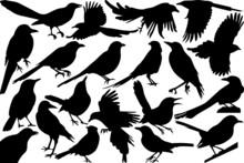 Magpie Bird SVG Cut Files   Magpie Bird Silhouette   Magpie Svg   Bird Svg   Flying Bird Svg   Sitting Bird Svg   Magpie Bird Bundle