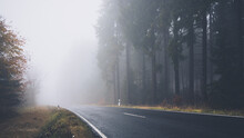 Foggy And Wet Road Surrounded By Source Trees