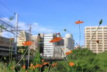 都会の道端に咲いたオレンジ色の花