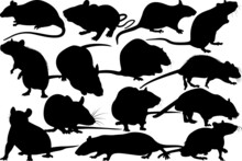 Rat SVG Cut Files | Rat Silhouette | Field Mouse Svg | Mouse Svg | Mice Svg | Rats Svg | Rat Bundle