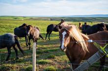 Bonitos Caballos En Islandia Un Dia Soleado De Verano