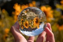 The World In A Ball - Die Welt In Einer Kugel - Fotokugel - Sonnenblumenfeld - Sonnenblumen