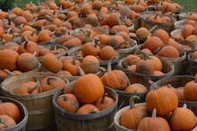 Baskets Full Of Pumpkins On Grass Field In Daylight