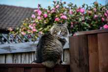 Brown Tabby Cat Sitting On Brown Fence