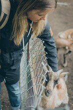 Girl Petting A Goat Behind The Fence