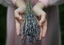 Person's Hands Holding Purple Flower