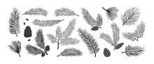 Pine Branch, Fir Icon, Vector Evergreen Plant, Christmas Tree And Pine Cone. Black Silhoettes Islated On White Backgrond. Winter Nature Illustration