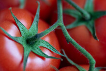 Red Tomato With Green Sepals