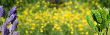 Dried Flowers With Blurred Yellow Flowers In Background