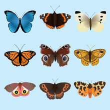 A Collection Of Butterflies And Moths. There Is A Morpho Menelaus A Vanessa Atalanta An Arran Brown A Small White, A Viceroy, An European Peacock, A Wall Brown, A Garden Tiger Moth And An Io Moth