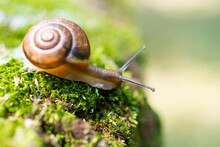Snail And Moss..