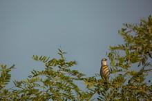 Dicksiccel Bird On Shadowy Branch