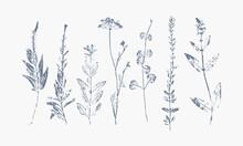 Set Of Monochrome Hand Printed Wild Grasses
