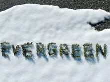 Evergreen In Pine Sprigs